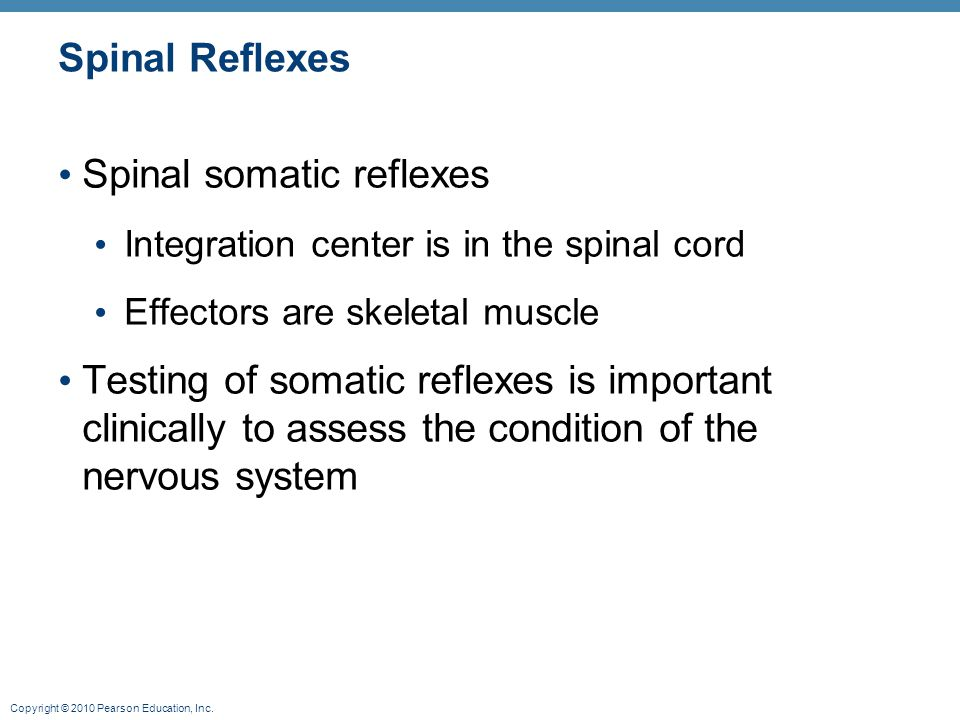 Copyright © 2010 Pearson Education, Inc. Spinal Reflexes Spinal somatic reflexes Integration center is in the spinal cord Effectors are skeletal muscl