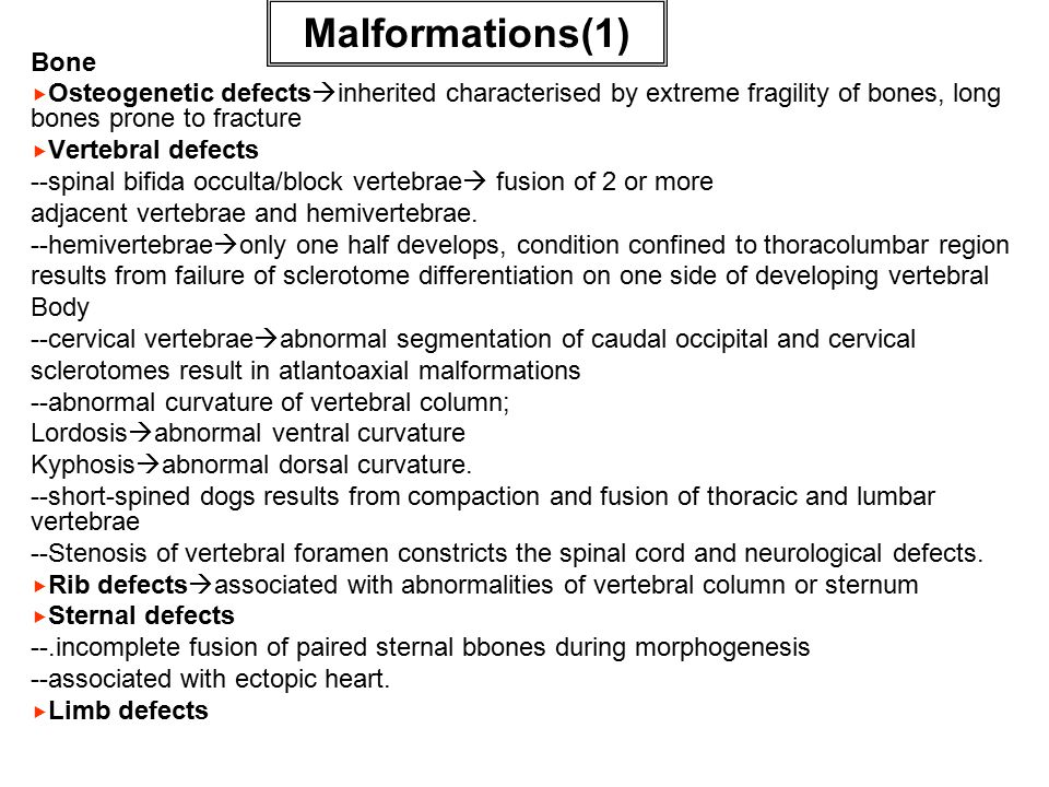 Malformations(1) Bone   Osteogenetic defects  inherited characterised by extreme fragility of bones, long bones prone to fracture   Vertebral defects --spinal bifida occulta/block vertebrae  fusion of 2 or more adjacent vertebrae and hemivertebrae.