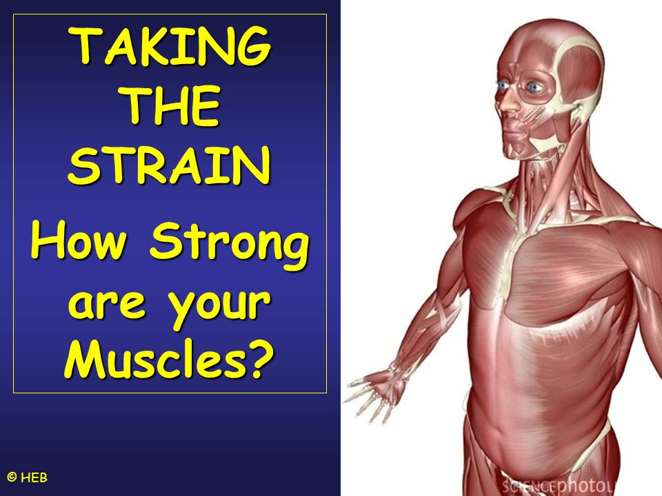 © HEB TAKING THE STRAIN How Strong are your Muscles?