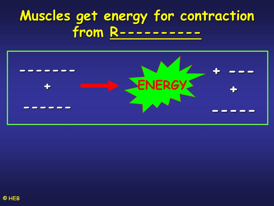 © HEB Muscles get energy for contraction from R---------- + --- + ----- ENERGY ------- + ------