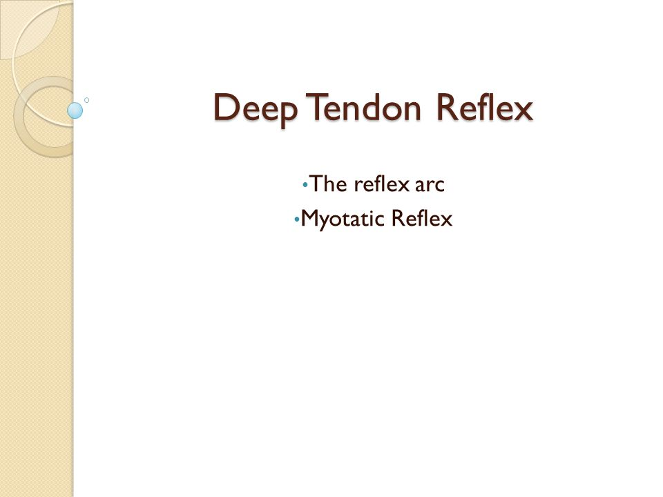 Deep Tendon Reflex The reflex arc Myotatic Reflex