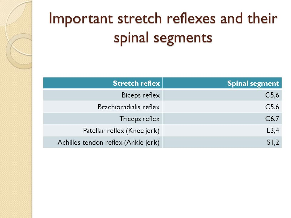 Important stretch reflexes and their spinal segments Spinal segmentStretch reflex C5,6Biceps reflex C5,6Brachioradialis reflex C6,7Triceps reflex L3,4Patellar reflex (Knee jerk) S1,2Achilles tendon reflex (Ankle jerk)