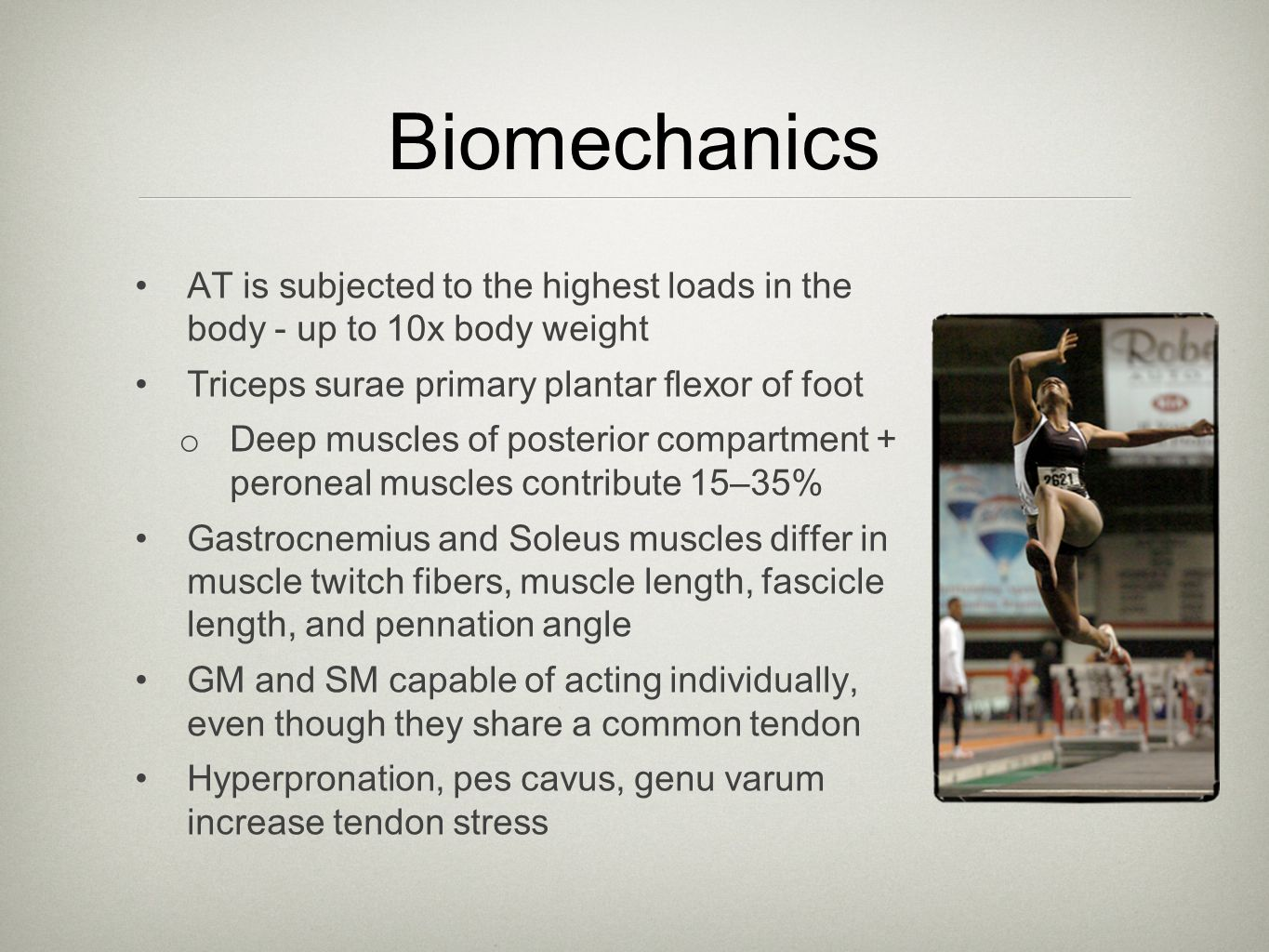 Biomechanics AT is subjected to the highest loads in the body - up to 10x body weight Triceps surae primary plantar flexor of foot o Deep muscles of po