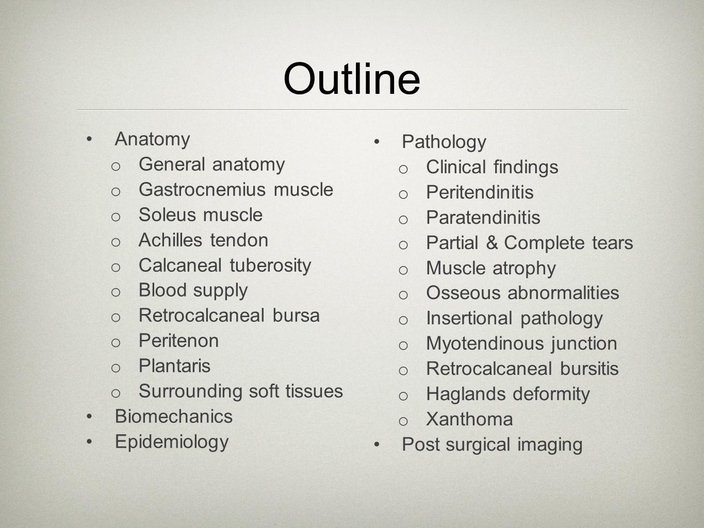 Outline Anatomy o General anatomy o Gastrocnemius muscle o Soleus muscle o Achilles tendon o Calcaneal tuberosity o Blood supply o Retrocalcaneal burs