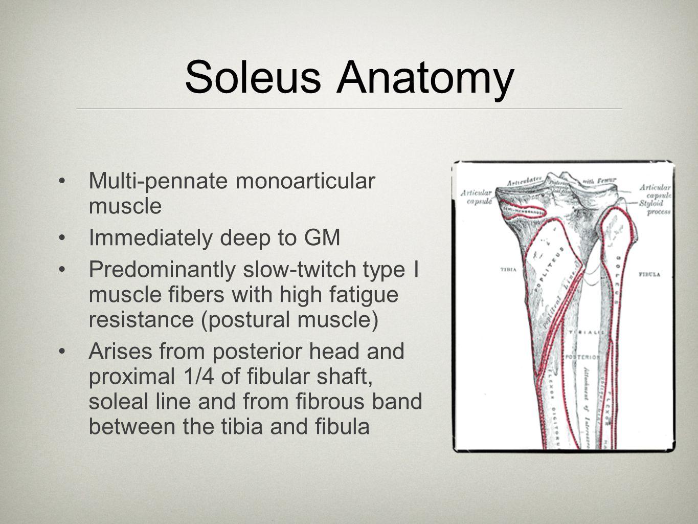 References Movin et al.Acute Rupture of the Achilles Tendon.