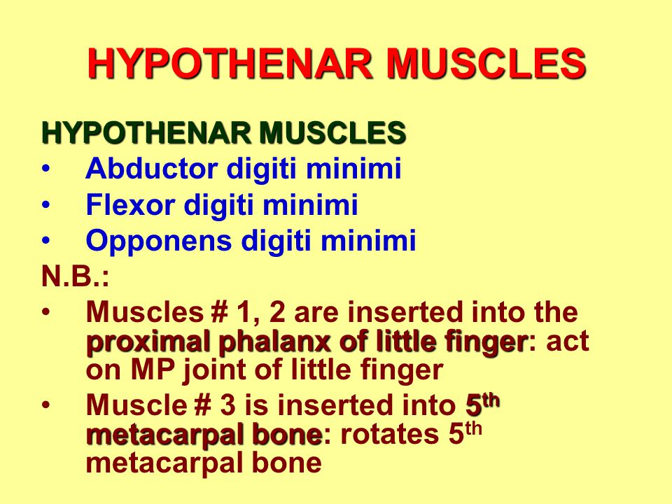 HYPOTHENAR MUSCLES Abductor digiti minimi Flexor digiti minimi Opponens digiti minimi N.B.: proximal phalanx of little fingerMuscles # 1, 2 are inserted into the proximal phalanx of little finger: act on MP joint of little finger 5 th metacarpal boneMuscle # 3 is inserted into 5 th metacarpal bone: rotates 5 th metacarpal bone