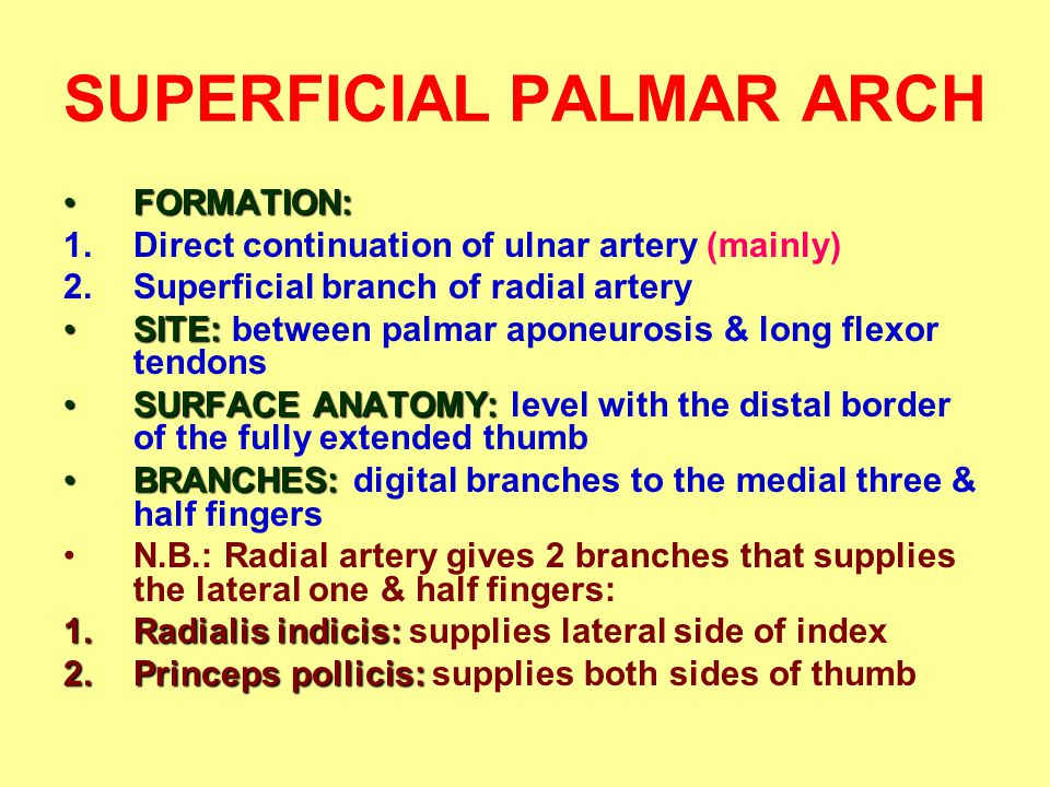 SUPERFICIAL PALMAR ARCH FORMATION:FORMATION: 1.Direct continuation of ulnar artery (mainly) 2.Superficial branch of radial artery SITE:SITE: between palmar aponeurosis & long flexor tendons SURFACE ANATOMY:SURFACE ANATOMY: level with the distal border of the fully extended thumb BRANCHES:BRANCHES: digital branches to the medial three & half fingers N.B.: Radial artery gives 2 branches that supplies the lateral one & half fingers: 1.Radialis indicis: 1.Radialis indicis: supplies lateral side of index 2.Princeps pollicis: 2.Princeps pollicis: supplies both sides of thumb