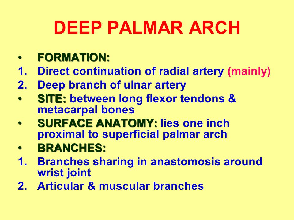 DEEP PALMAR ARCH FORMATION:FORMATION: 1.Direct continuation of radial artery (mainly) 2.Deep branch of ulnar artery SITE:SITE: between long flexor tendons & metacarpal bones SURFACE ANATOMY:SURFACE ANATOMY: lies one inch proximal to superficial palmar arch BRANCHES:BRANCHES: 1.Branches sharing in anastomosis around wrist joint 2.Articular & muscular branches