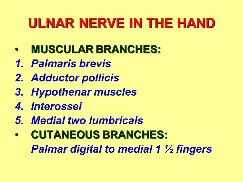 ULNAR NERVE IN THE HAND MUSCULAR BRANCHES:MUSCULAR BRANCHES: 1.Palmaris brevis 2.Adductor pollicis 3.Hypothenar muscles 4.Interossei 5.Medial two lumbricals CUTANEOUS BRANCHES:CUTANEOUS BRANCHES: Palmar digital to medial 1 ½ fingers