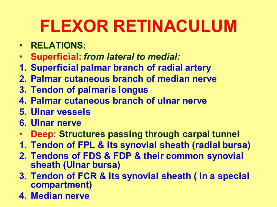 FLEXOR RETINACULUM RELATIONS: Superficial: from lateral to medial: 1.Superficial palmar branch of radial artery 2.Palmar cutaneous branch of median nerve 3.Tendon of palmaris longus 4.Palmar cutaneous branch of ulnar nerve 5.Ulnar vessels 6.Ulnar nerve Deep: Structures passing through carpal tunnel 1.Tendon of FPL & its synovial sheath (radial bursa) 2.Tendons of FDS & FDP & their common synovial sheath (Ulnar bursa) 3.Tendon of FCR & its synovial sheath ( in a special compartment) 4.Median nerve