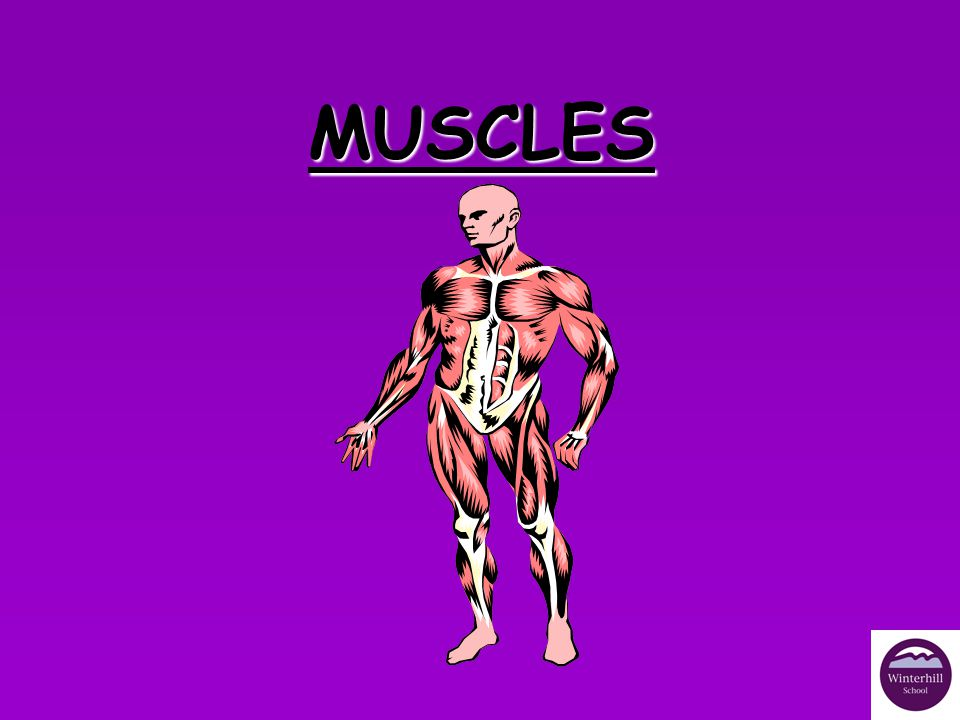 TYPES OF MUSCLE There are 3 types of muscle:There are 3 types of muscle: - Involuntary (smooth) –Cardiac –Voluntary (skeletal/ striated/striped).