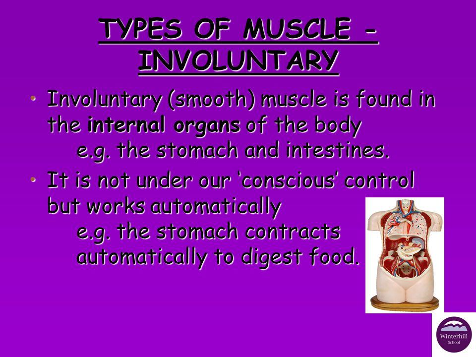 TYPES OF MUSCLE - CARDIAC Cardiac muscle is only found in the heart.Cardiac muscle is only found in the heart.