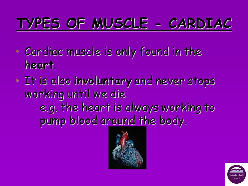 TYPES OF MUSCLE – VOLUNTARY/SKELETAL Voluntary muscle is associated with movement, and can be found all over the body attached to the skeleton.Voluntary muscle is associated with movement, and can be found all over the body attached to the skeleton.