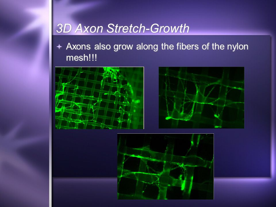  Axons also grow along the fibers of the nylon mesh!!! 3D Axon Stretch-Growth