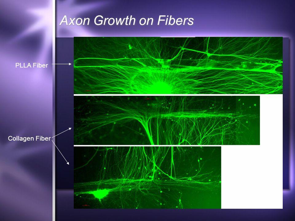 Axon Growth on Fibers PLLA Fiber Collagen Fiber