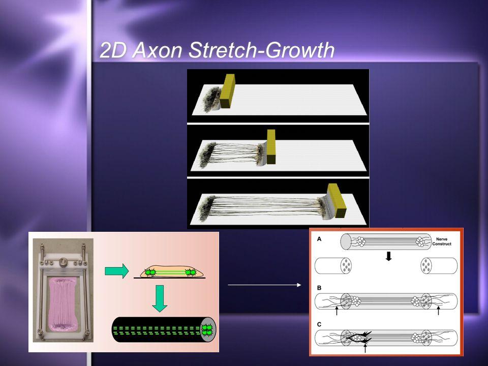 2D Axon Stretch-Growth