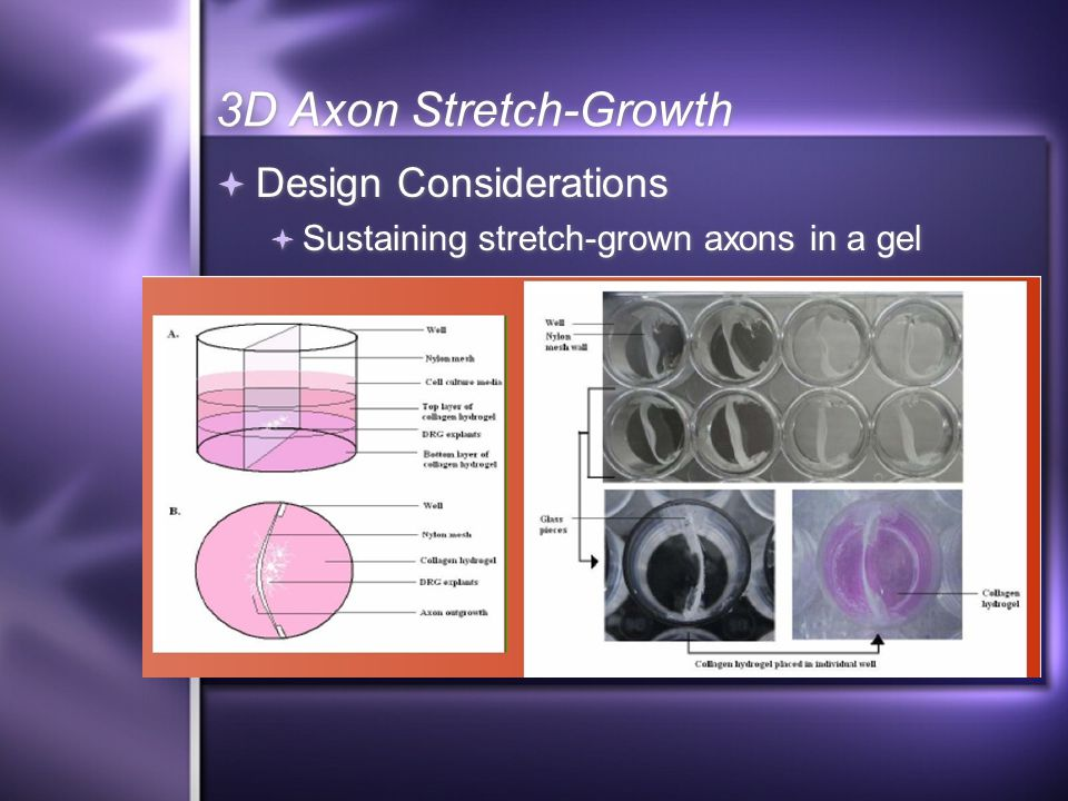 3D Axon Stretch-Growth  Design Considerations  Sustaining stretch-grown axons in a gel  Design Considerations  Sustaining stretch-grown axons in a gel