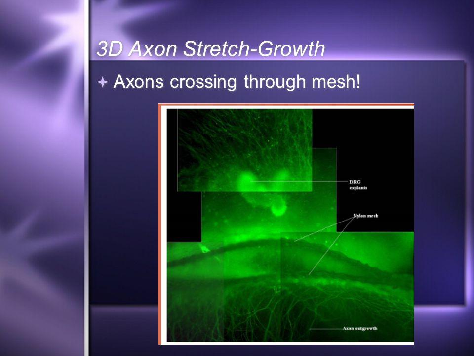 3D Axon Stretch-Growth  Axons crossing through mesh!
