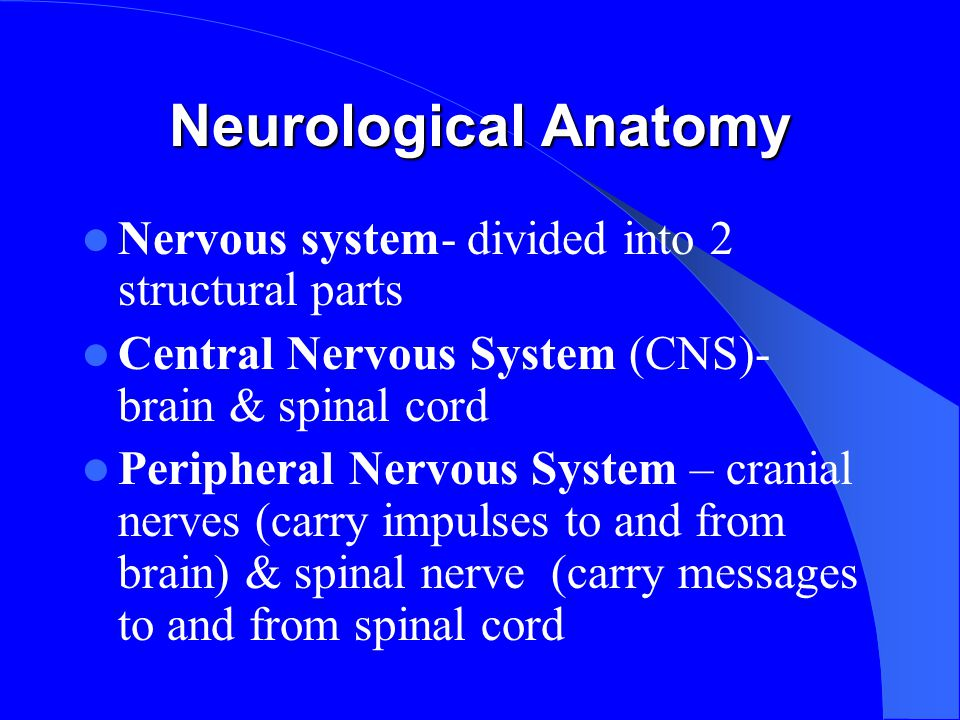 Neurological Anatomy Nervous system- divided into 2 structural parts Central Nervous System (CNS)- brain & spinal cord Peripheral Nervous System – cranial nerves (carry impulses to and from brain) & spinal nerve (carry messages to and from spinal cord