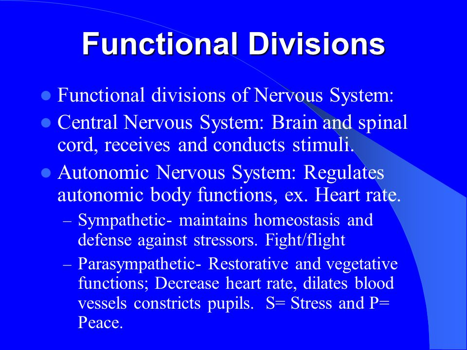 Functional Divisions Functional divisions of Nervous System: Central Nervous System: Brain and spinal cord, receives and conducts stimuli.