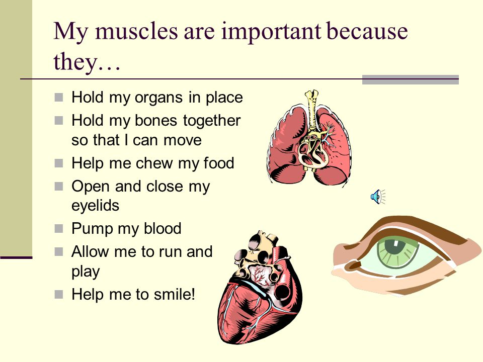 My muscles are important because they… Hold my organs in place Hold my bones together so that I can move Help me chew my food Open and close my eyelids Pump my blood Allow me to run and play Help me to smile!