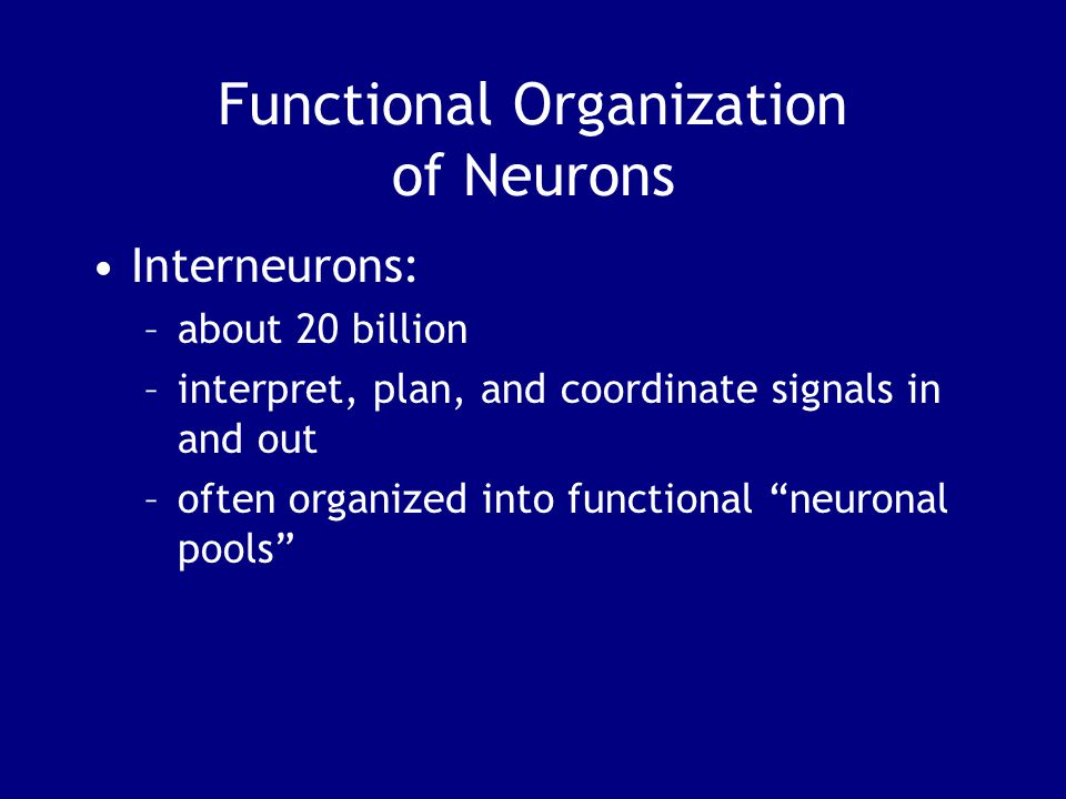 Functional Organization of Neurons Interneurons: –about 20 billion –interpret, plan, and coordinate signals in and out –often organized into functiona