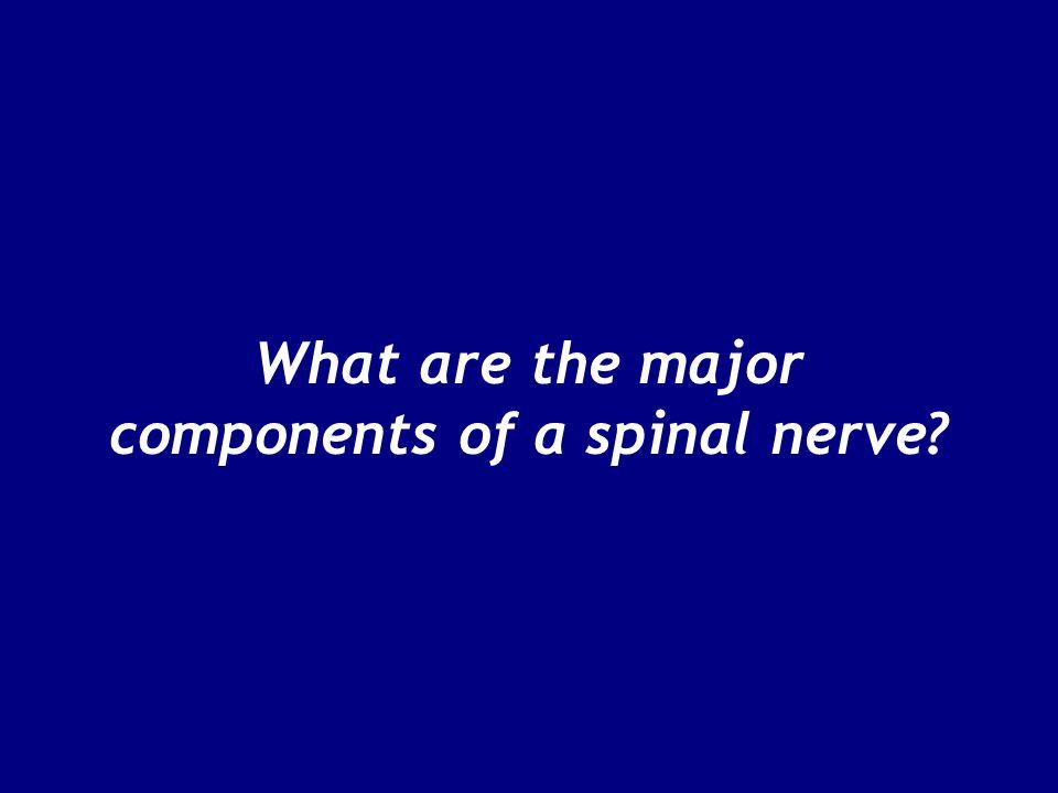Figure 13–6 Spinal Nerves