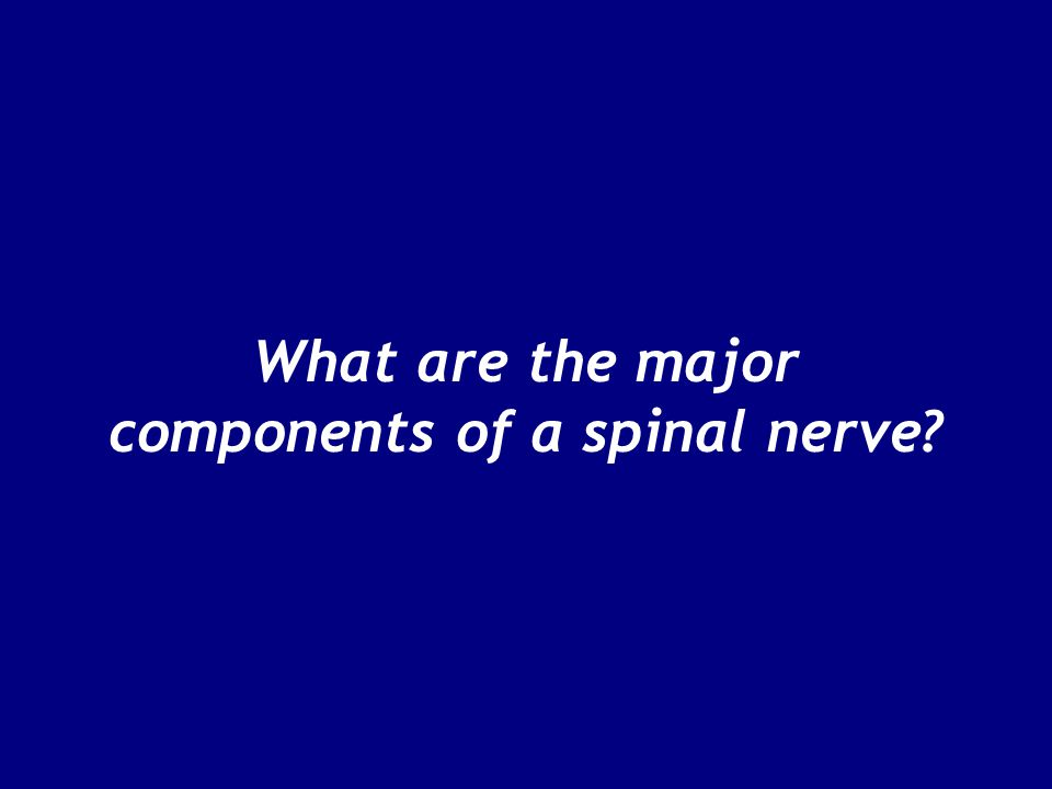 Figure 13–12c, d The Lumbar and Sacral Plexuses