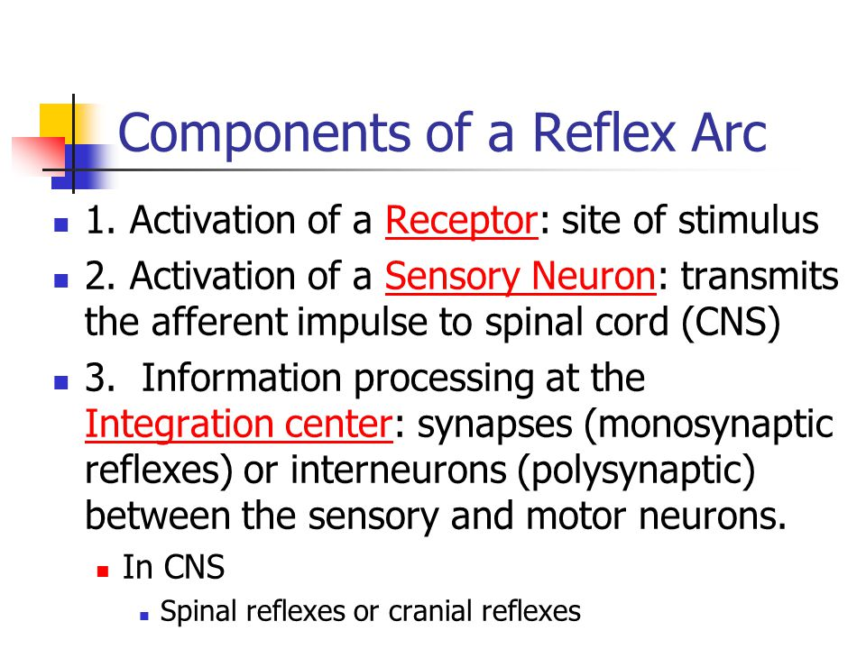 Components of a Reflex Arc 1. Activation of a Receptor: site of stimulus 2. Activation of a Sensory Neuron: transmits the afferent impulse to spinal c
