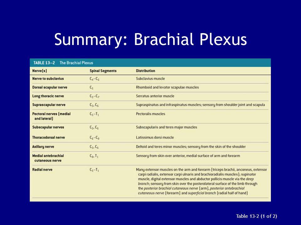 Table 13–2 (1 of 2) Summary: Brachial Plexus
