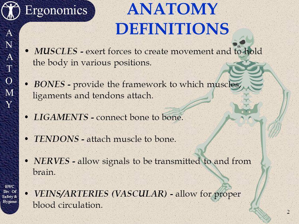 1 Ergonomics ANATOMYANATOMY BWC Div. Of Safety & Hygiene Anatomy and Physiology