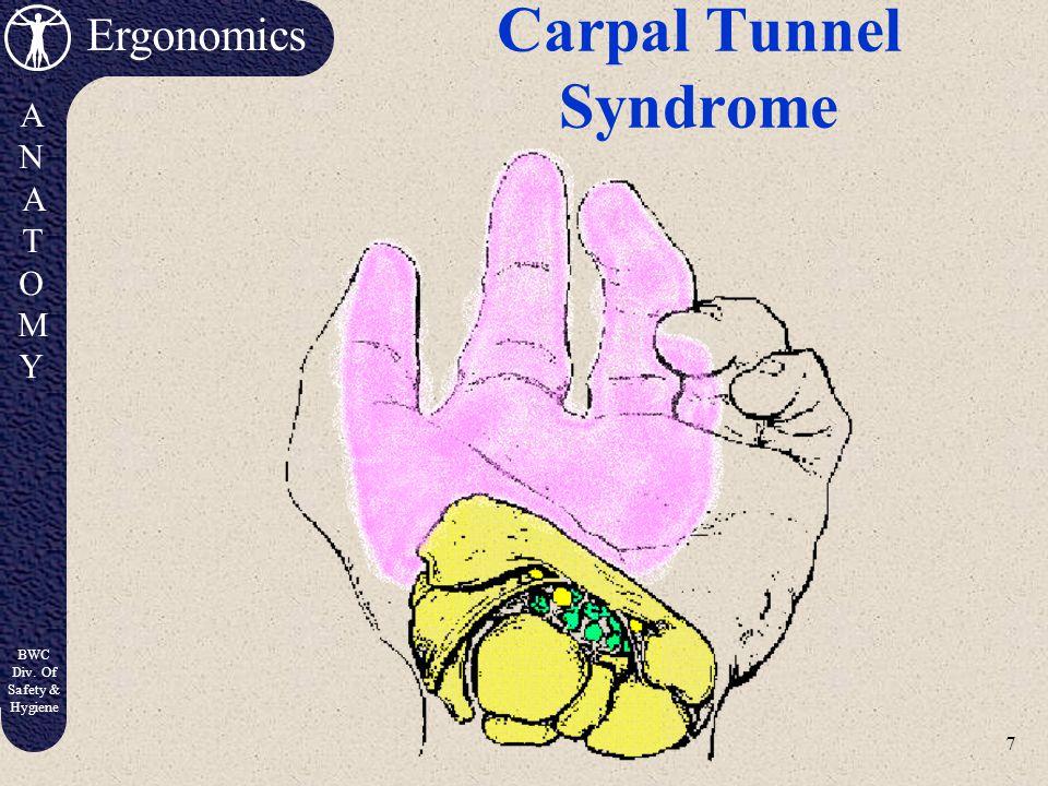 6 Ergonomics ANATOMYANATOMY BWC Div. Of Safety & Hygiene Carpal Tunnel