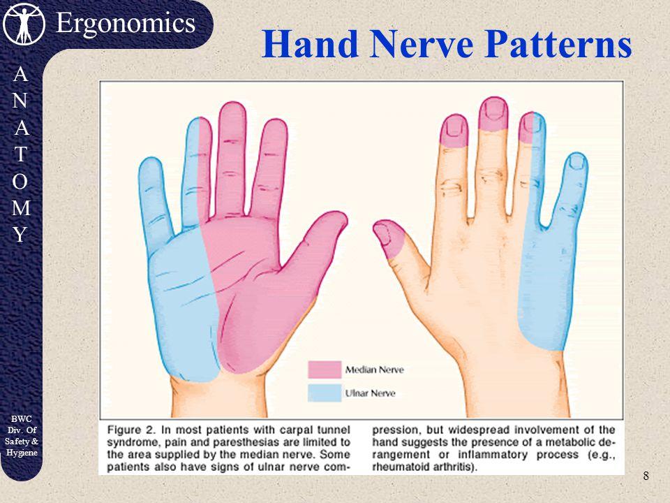 7 Ergonomics ANATOMYANATOMY BWC Div. Of Safety & Hygiene Carpal Tunnel Syndrome