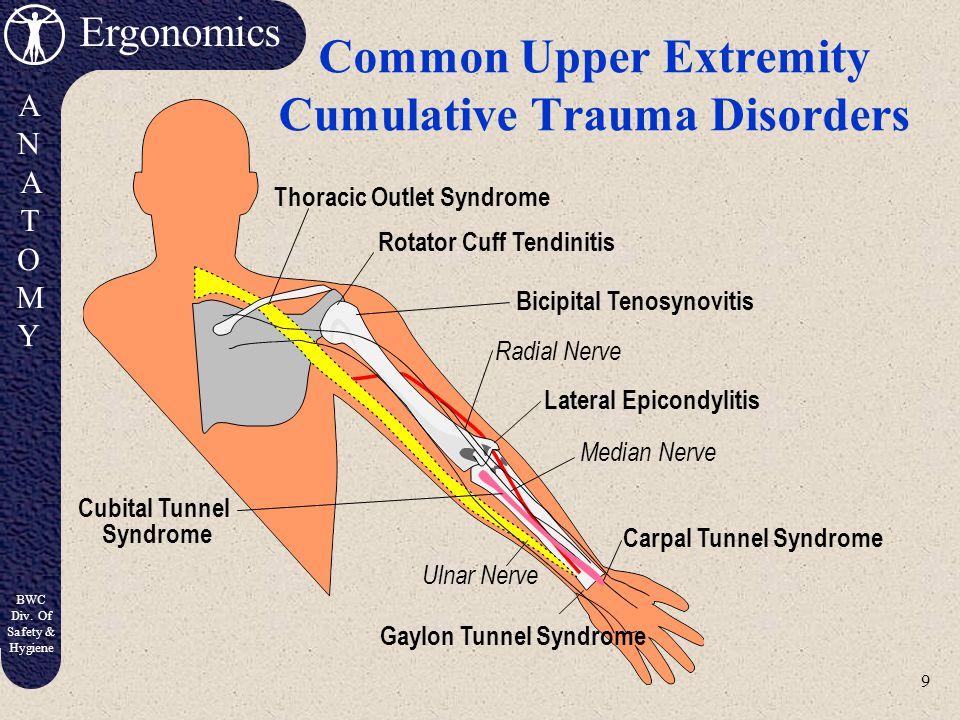 8 Ergonomics ANATOMYANATOMY BWC Div. Of Safety & Hygiene Hand Nerve Patterns