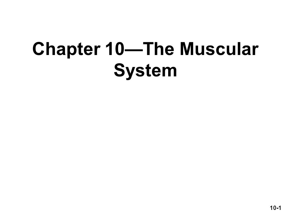 Chapter 10—The Muscular System 10-1