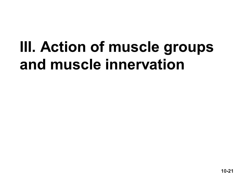 III. Action of muscle groups and muscle innervation 10-21