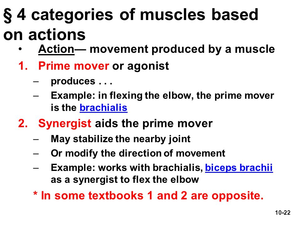 10-22 § 4 categories of muscles based on actions Action— movement produced by a muscle 1.Prime mover or agonist –produces... –Example: in flexing the