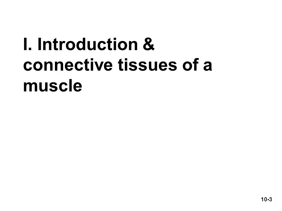 I. Introduction & connective tissues of a muscle 10-3