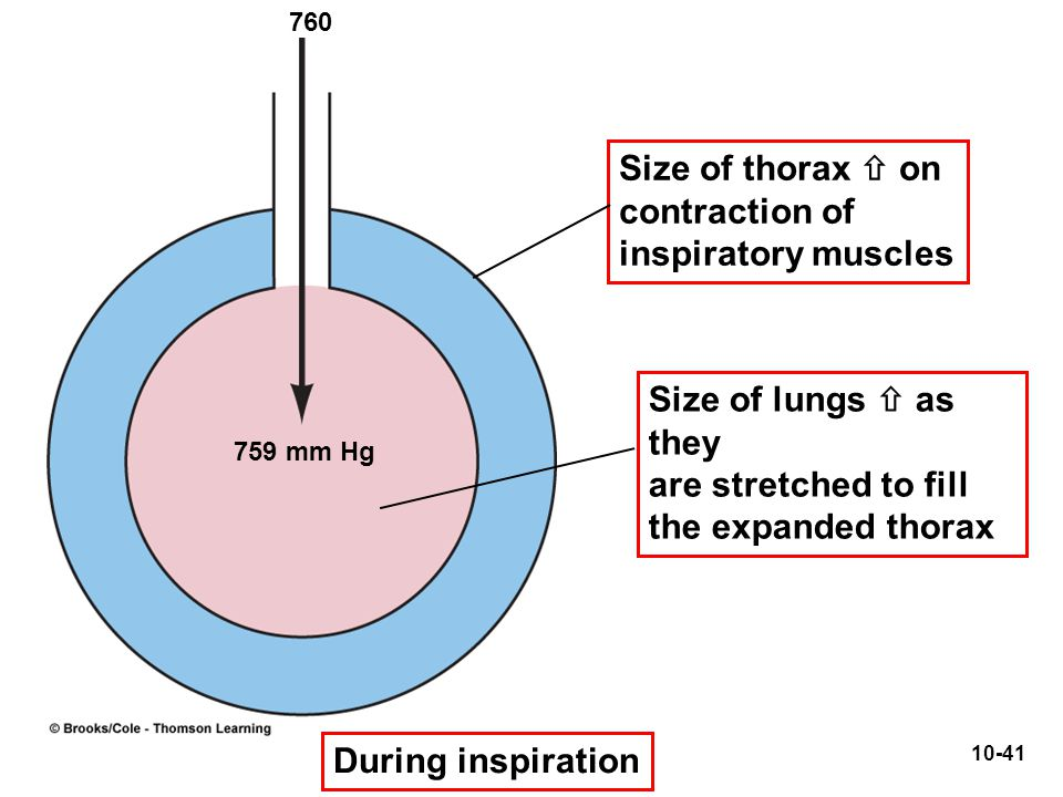 759 mm Hg Size of thorax  on contraction of inspiratory muscles Size of lungs  as they are stretched to fill the expanded thorax During inspiration
