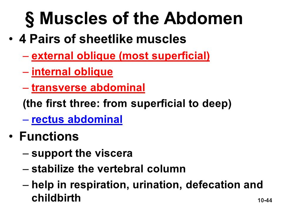 10-44 4 Pairs of sheetlike muscles –external oblique (most superficial) –internal oblique –transverse abdominal (the first three: from superficial to