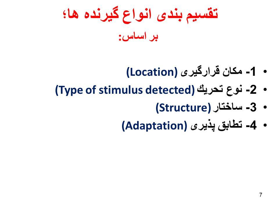 58 Adaptation – static & dynamic responses (static) (dynamic)