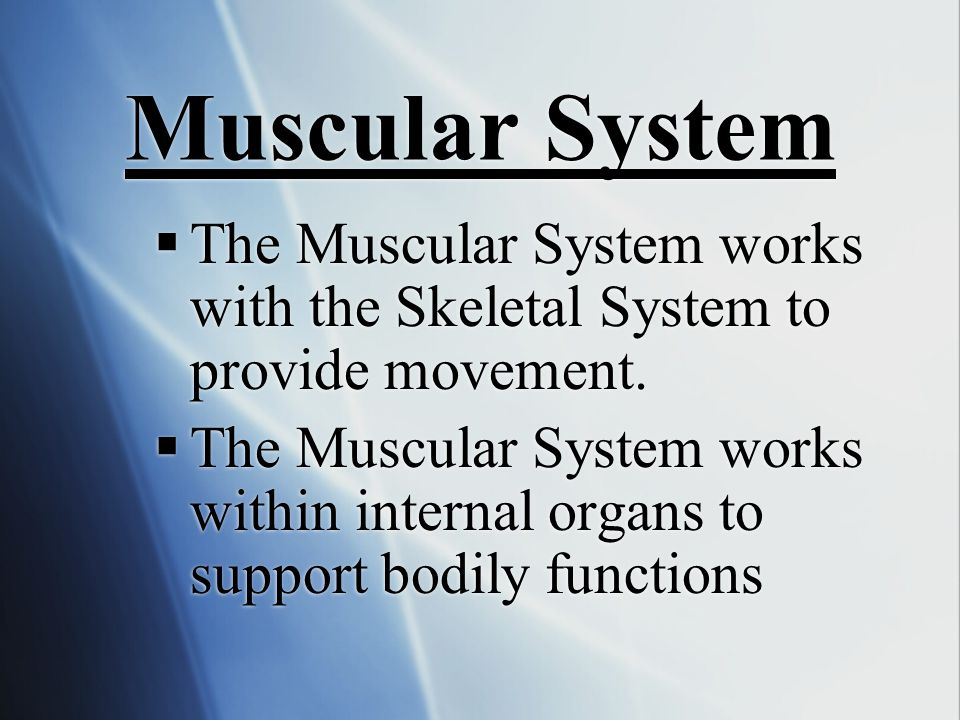 Muscular System  The Muscular System works with the Skeletal System to provide movement.  The Muscular System works within internal organs to suppor