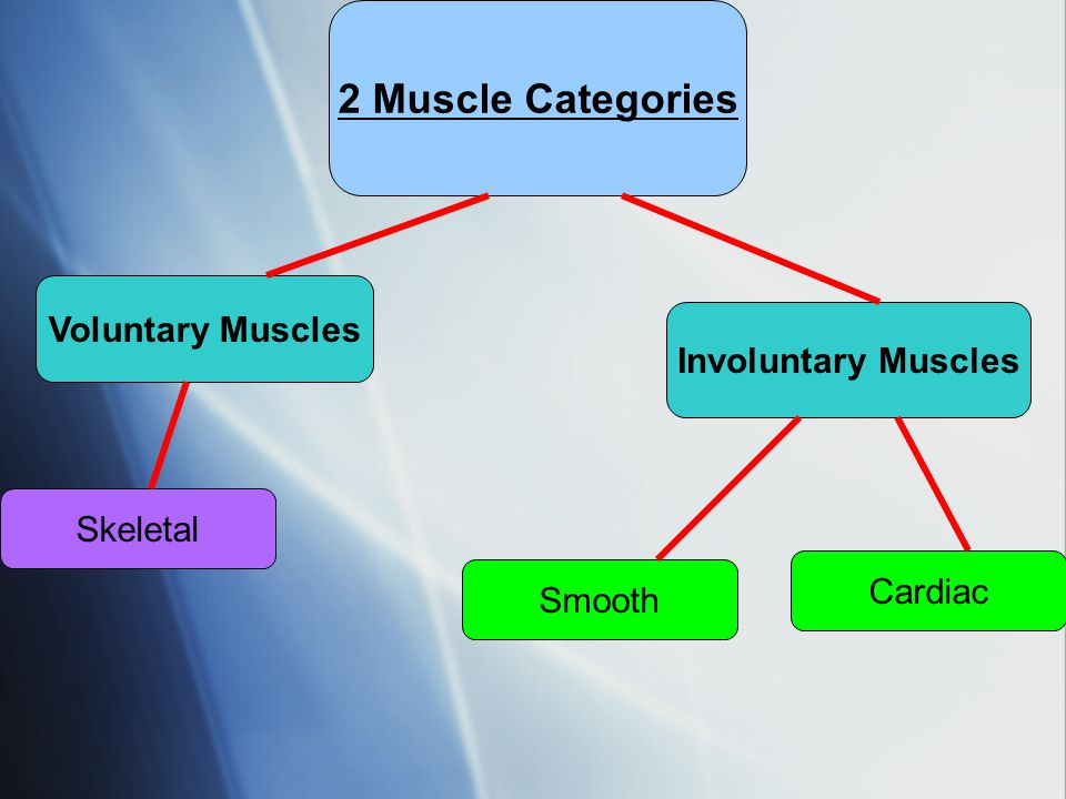 Voluntary Muscles  Muscles that are under conscious control Examples:  Muscles that move joints (biceps and triceps)  Muscles that move skin (smiling, raising your eyebrows)  Muscles that are under conscious control Examples:  Muscles that move joints (biceps and triceps)  Muscles that move skin (smiling, raising your eyebrows)