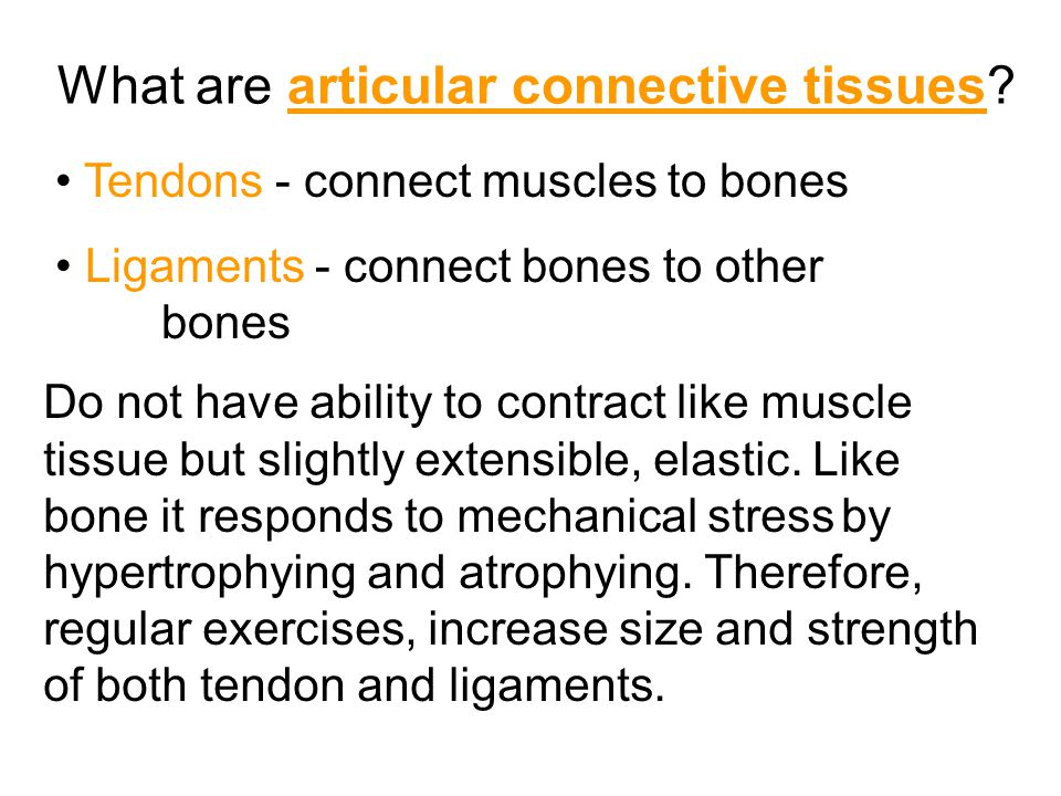What are articular connective tissues.