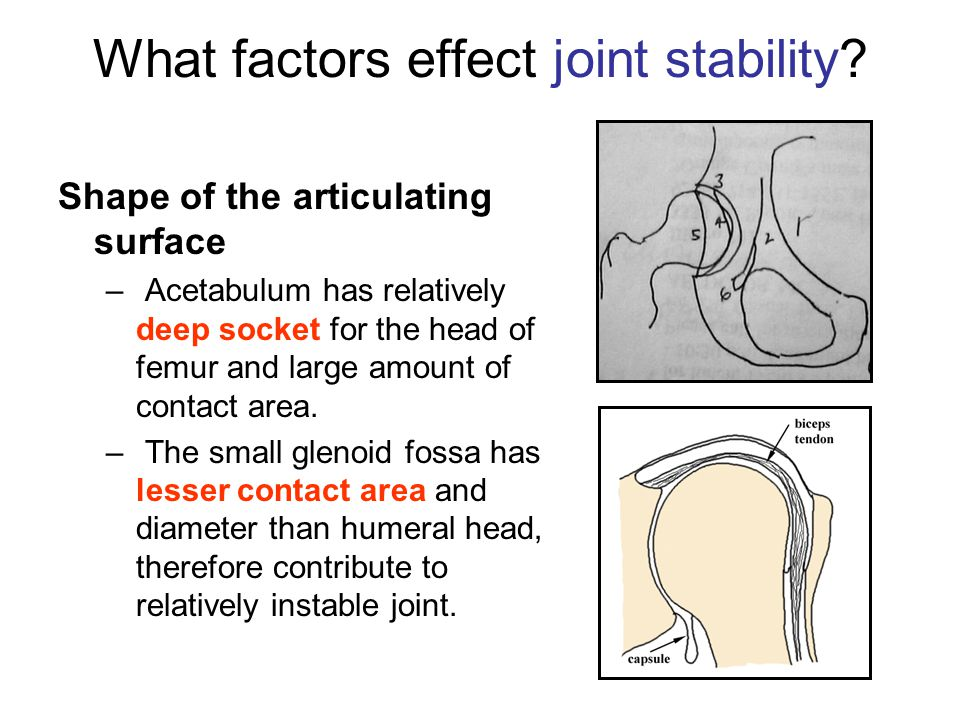 What factors effect joint stability.