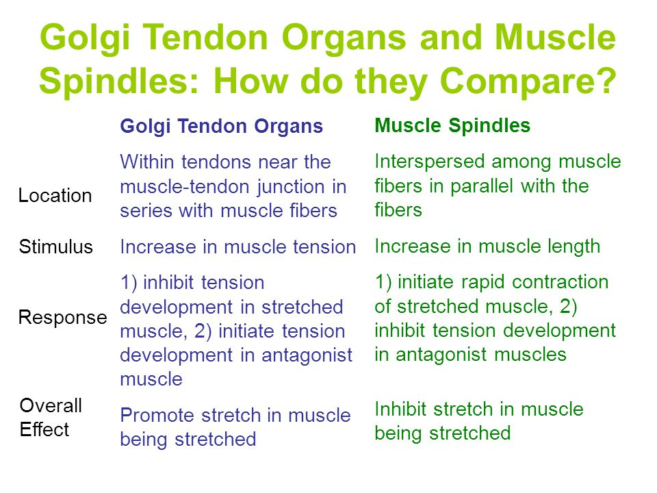 Golgi Tendon Organs and Muscle Spindles: How do they Compare.
