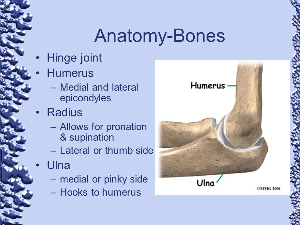 Anatomy-Bones Hinge joint Humerus –Medial and lateral epicondyles Radius –Allows for pronation & supination –Lateral or thumb side Ulna –medial or pin