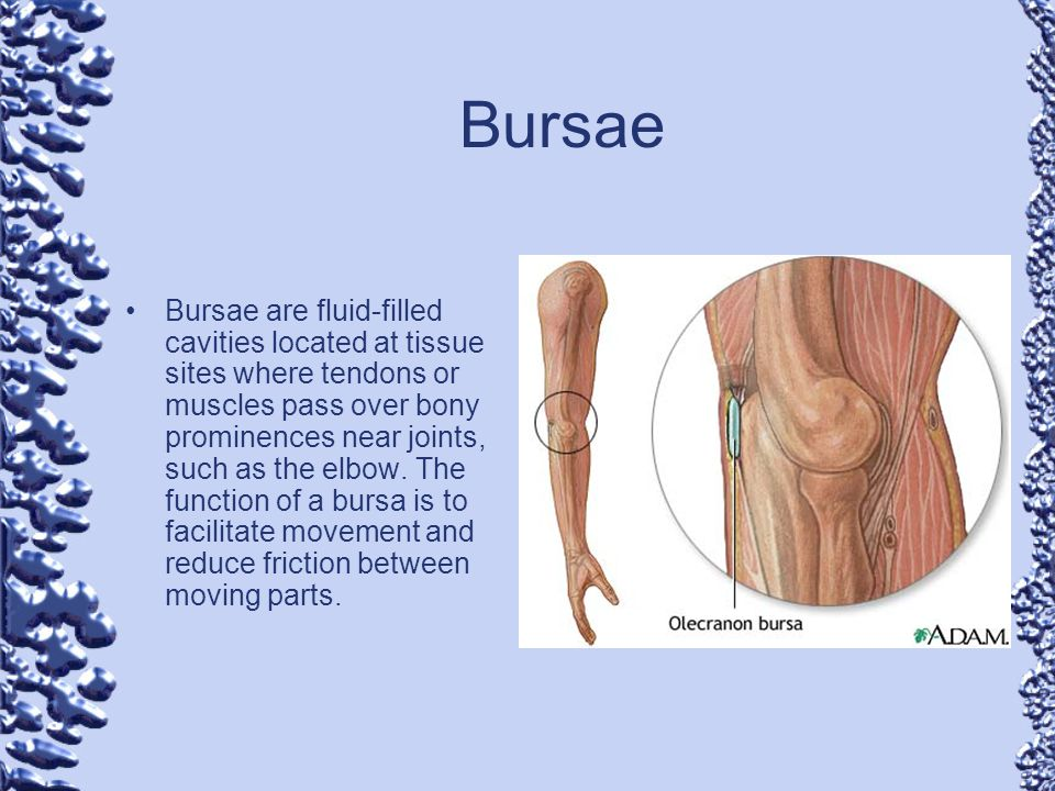 Bursae Bursae are fluid-filled cavities located at tissue sites where tendons or muscles pass over bony prominences near joints, such as the elbow. Th