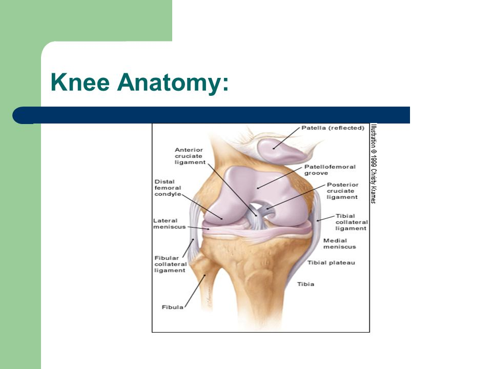 Knee Examination History: ask about current mechanism of injury, prior injuries or surgeries to knee.