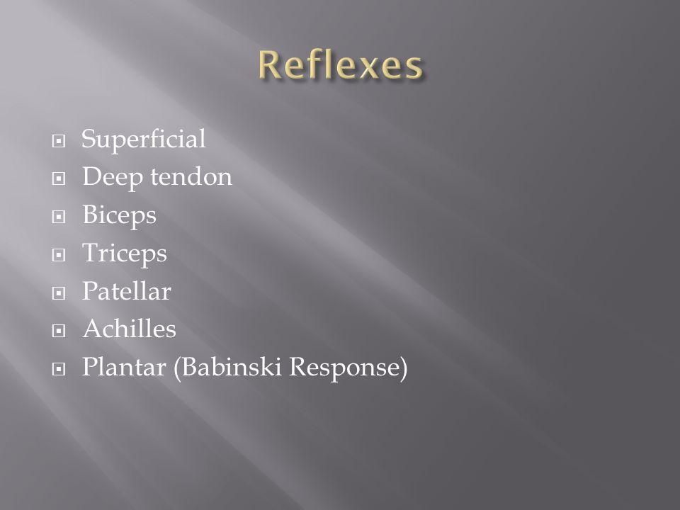  Superficial  Deep tendon  Biceps  Triceps  Patellar  Achilles  Plantar (Babinski Response)